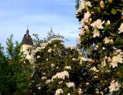 1.ogrod_botaniczny_w_zagwizdziu_murow